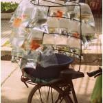 Vietnamese winkelwieler, Hanoi