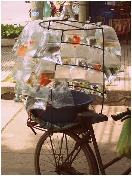 Vietnamese winkelwieler