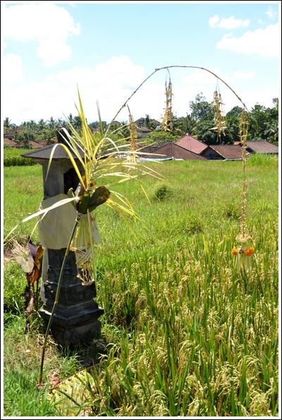 Dewi Sri offering, Ubud