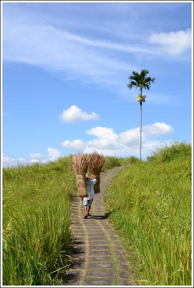 Campuan Ridge hike, Ubud