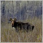 Op zoek naar de eland