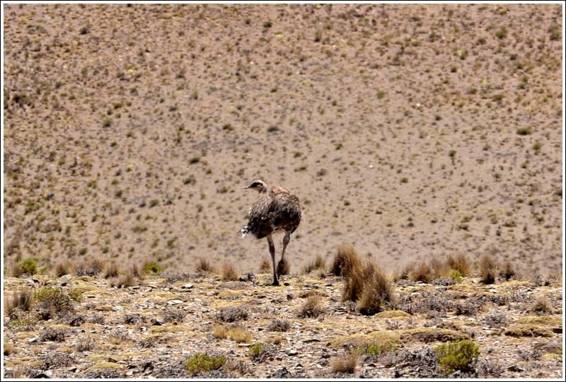 emoe patagonie