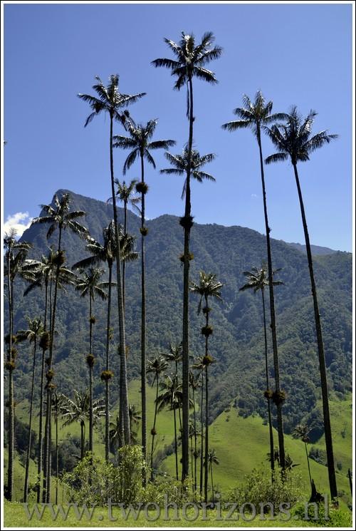 Wax palmen La Cocora